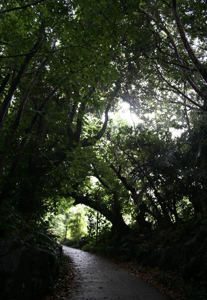 奄美風庭園入口