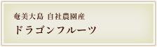 奄美大島自社農園産ドラゴンフルーツ