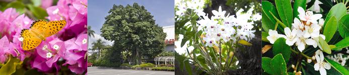 奄美の里を代表する植物