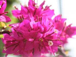 奄美の里の見頃を迎える花々をご紹介