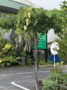 奄美の里 植物日記
