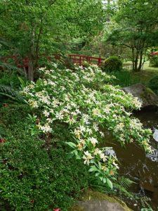奄美の里の庭園に甘い香り…それは・・・。~奄美の里花物語~